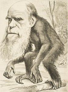 Darwin caricaturizado